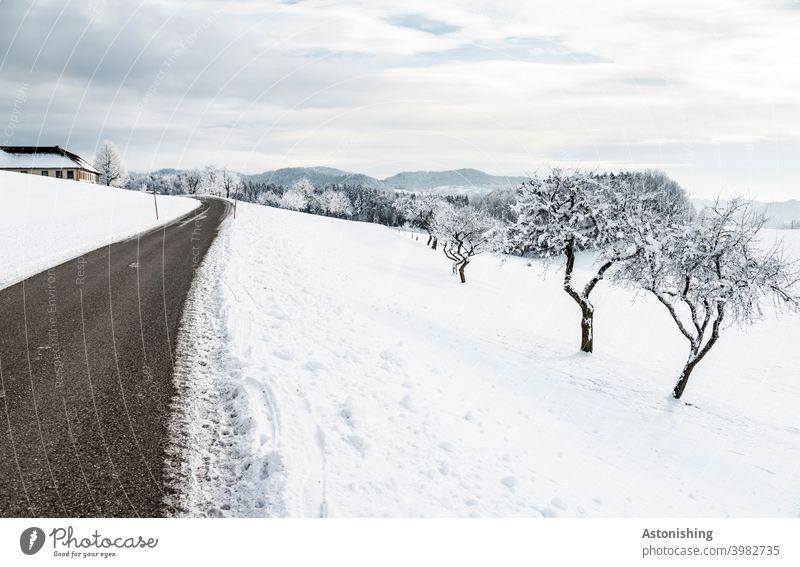 Winterlandschaft mit Straße und Bäumen Natur Schnee weiß Weg Aussicht Horizont Wald Österreich Mühlviertel Spur Umwelt Wetter Jahreszeit Himmel Wolken Blau