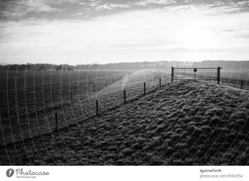 Frostiger Morgen Deich morgens Morgennebel morgenlicht Morgenstimmung Raureif Außenaufnahme Landschaft Menschenleer Morgendämmerung Sonnenlicht Sonnenaufgang