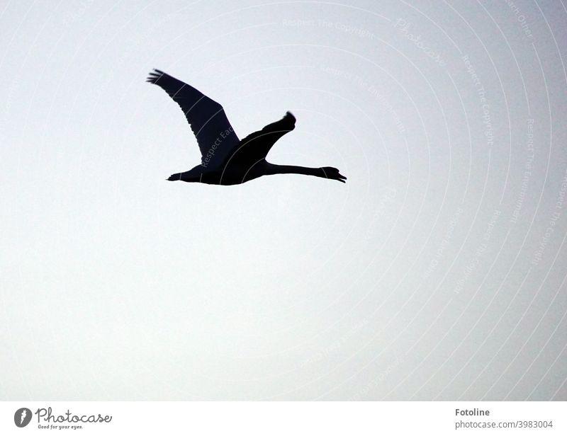 Kranichflug vor einem wolkigen, orangefarbenen Himmel. Da fliegen sie im Sonnenaufgang. Vogel Natur Außenaufnahme Wildtier Farbfoto Tier Menschenleer Umwelt