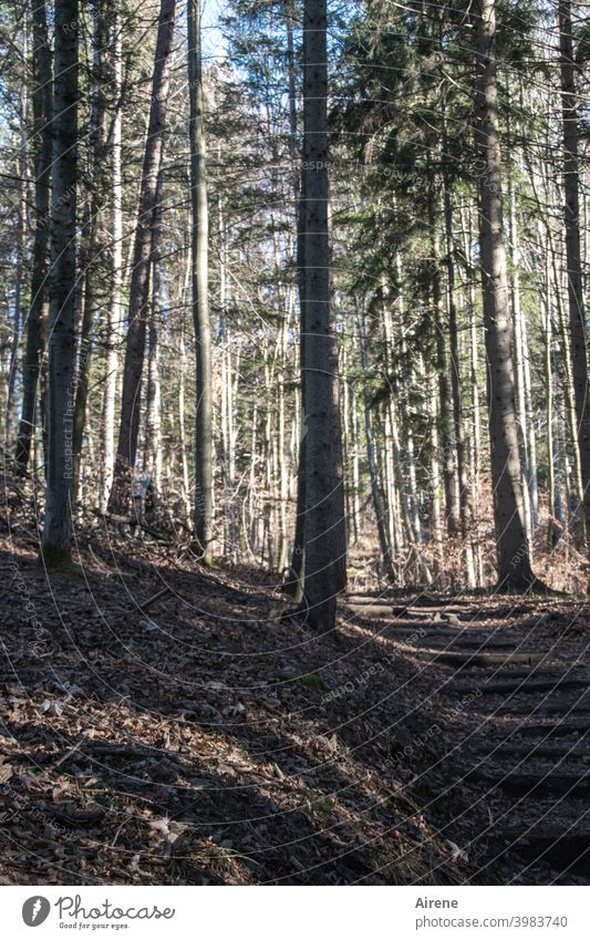 weiter und weiter von Baum zu Baum Wald Waldweg Wege & Pfade Fußweg Ruhe Stille friedlich still Einsamkeit ruhig menschenleer wandern allein einsam Baumstämme