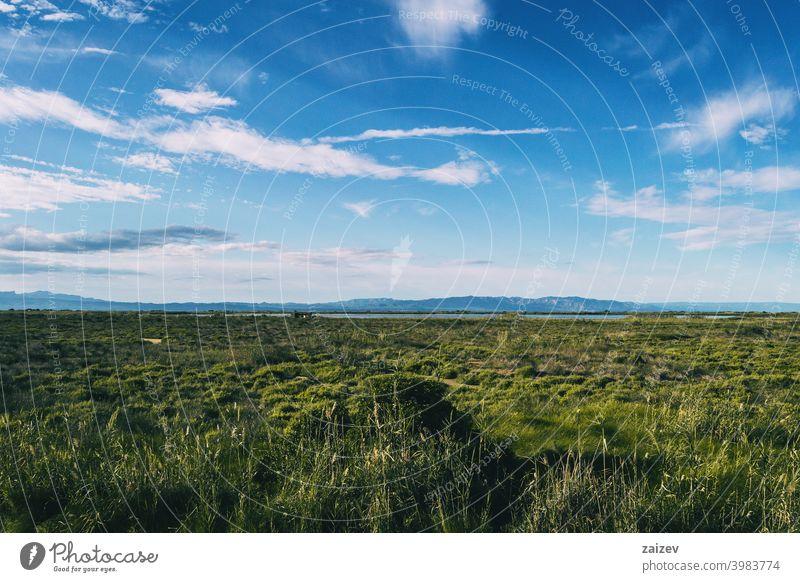 ländliche landschaft im delta del ebro mit der landwirtschaft der region System horizontal umgebungsbedingt Interesse Ökosystem Ackerland Spanisch tagsüber