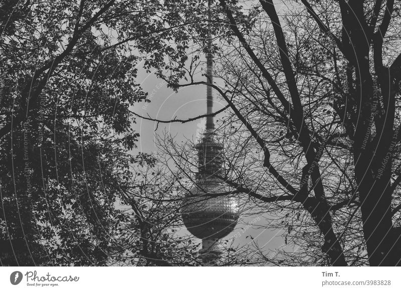 der Berliner Fernsehturm in Schwarzweiß Alexanderplatz Architektur Turm Wahrzeichen Hauptstadt Baum Schwarzweißfoto Sehenswürdigkeit Berlin-Mitte Bauwerk