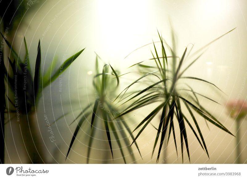Topfpflanzen hinter Milchglas ast baum menschenleer natur rasen stamm strauch textfreiraum tiefenschärfe topfpflanze zimmerpflanze büro scheibe milchglas