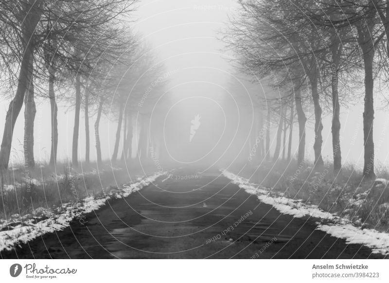 Baumgesäumte Straße im Winter und Nebel Land Wetter Transport Nirgendwo Mysterium reisen neblig Hintergrund Gefahr Voraussetzung Park Entsetzen Herbst spukhaft