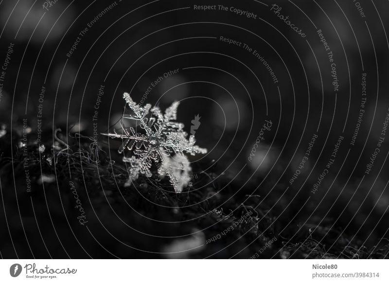 Schneeflocke auf schwarzer Mütze Schneeflocke auf Stoff Winter kalt Eis Außenaufnahme Schneefall Frost Farbfoto zart zerbrechlich Eiskristall Menschenleer