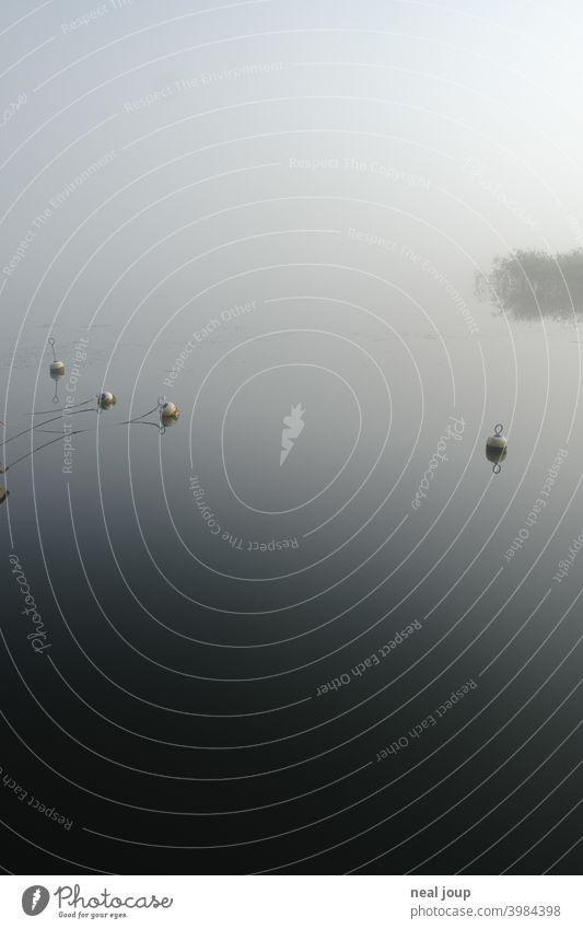 Kleine Bojen auf spiegelglattem See im Morgennebel Ruhe Natur Idylle Poesie Stimmung Harmonie Wasser Wasseroberfläche Spiegelung Reflektion früh morgens
