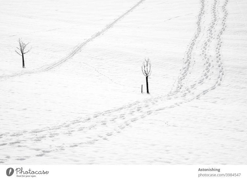 Schneespuren Spuren Winter Bäume Kleimbäume zwei 2 Tal unten hinunter hinauf runter rauf Wege weiß grau Kontrast Winterwanderung gehen Wanderung wandern