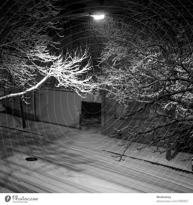 Summersnow Umwelt Pflanze Wasser Winter schlechtes Wetter Schnee Schneefall Baum Grünpflanze fallen fliegen kalt nass natürlich wild grau schwarz weiß Ast