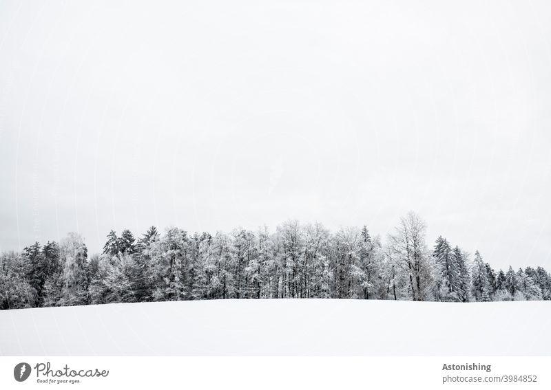 Wald-Linie im Winter Österreich Farbfoto Textfreiraum unten stille ruhig Einsamkeit Tag Textfreiraum oben Klima Schneedecke Jahreszeiten Menschenleer