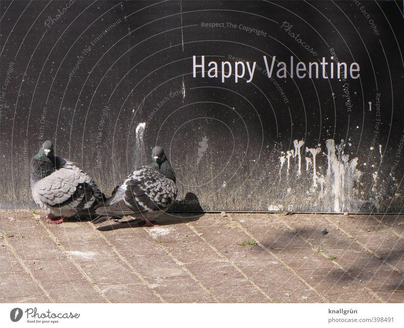 Happy Valentine Mauer Wand Tier Wildtier Vogel Taube 2 Tierpaar Schriftzeichen Brunft beobachten Blick stehen warten dreckig Zusammensein Stadt braun grau