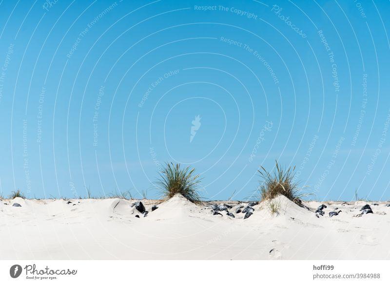 zwei Hügel mit Strandhafer Küste Stranddüne Düne versanden Sandstrand Sommer Ferien & Urlaub & Reisen Natur Blauer Himmel Nordseeinsel baltrum minimalistisch