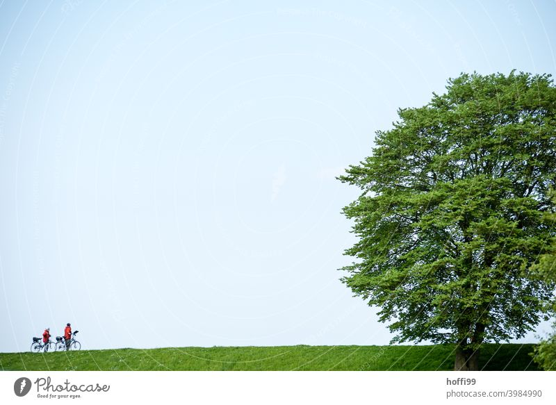 zwei Radfahrer mit einem großen Baum auf einem grünen Deich Radfahren Radfahrerin radfahrer Deichkrone großer Baum grüne Wiese Lifestyle im Freien Biker Fahrrad