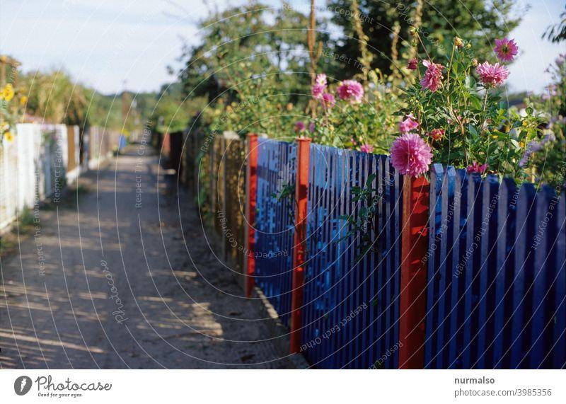 Kleingartenidyll Zaun Blumen Sommer farben blau rosa grün schrebergarten Freizeit Erholung kolonie Gartenhaus gemüse rasen lattenzaun Pfosten