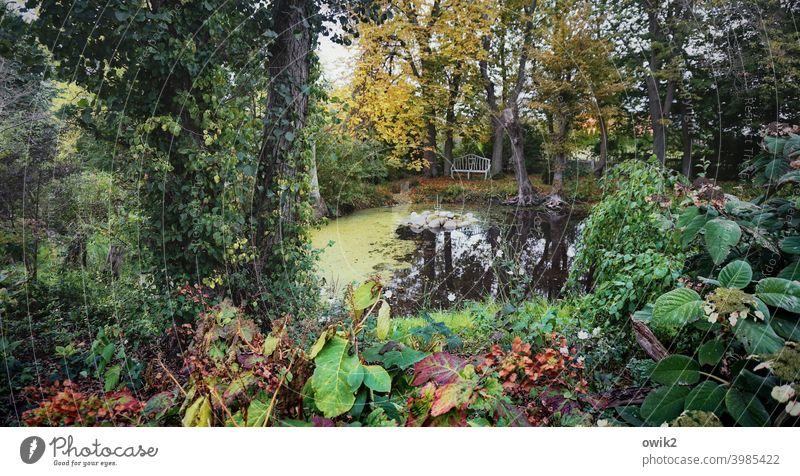Zugewachsen Panorama (Aussicht) Totale Low Key Schatten Textfreiraum links Textfreiraum rechts Menschenleer Außenaufnahme Farbfoto Wasseroberfläche Herbst