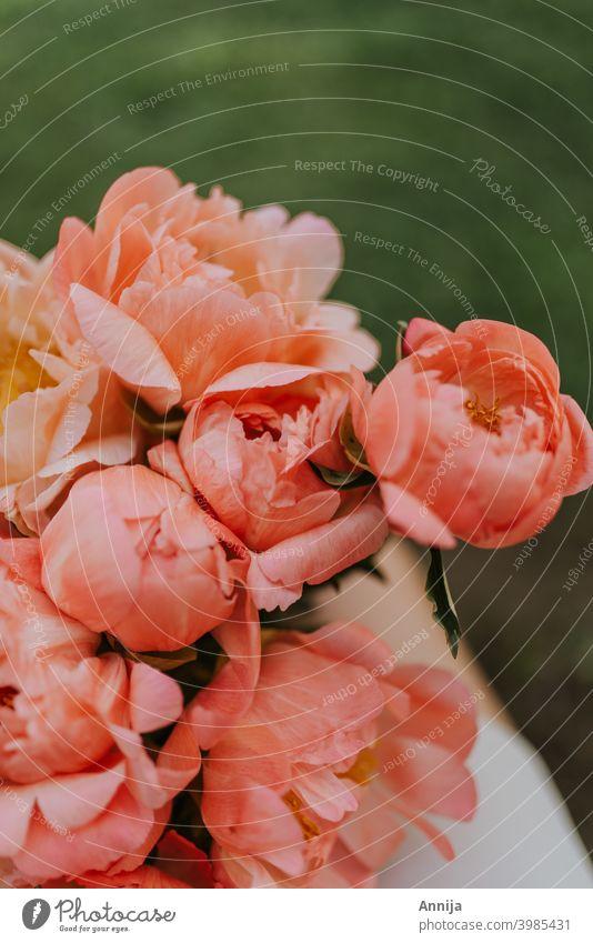 Pfingstrosen Blume Blütezeit geblümt Frühling rosa romantisch frisch Natur Blumenstrauß orange Korallen