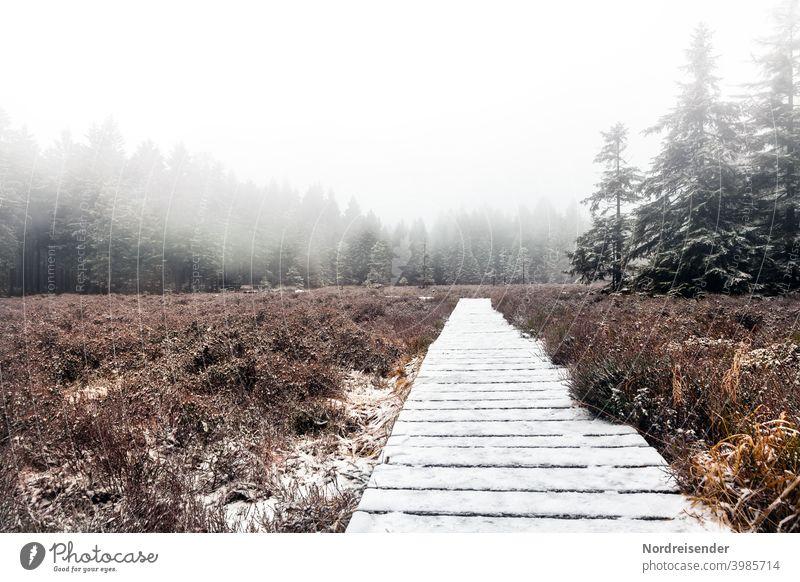Schützenbergmoor im Thüringer Wald mit erstem Schnee und Nebel schützenbergmoor sumpf nebel pfad steg wanderweg wald schnee winter reservat naturreservat