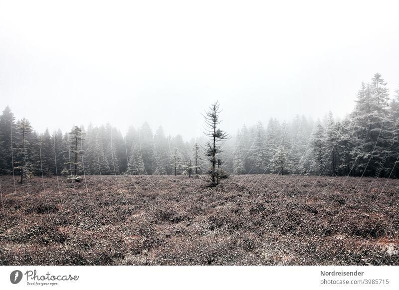Schützenbergmoor im Thüringer Wald mit erstem Schnee und Nebel Textfreiraum oben thüringer wald einsamkeit natur landschaft kälte menschenleer ökologie gras