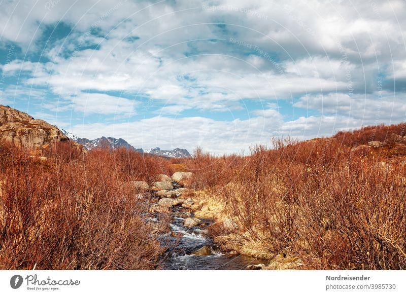 Kleiner Bach auf den Lofoten im Frühling Berge Gebirge Felsen Gewässer Wasser Gras Strauch Bachlauf fließen Dynamik lebendig Panorama Aussicht Naturschönheit