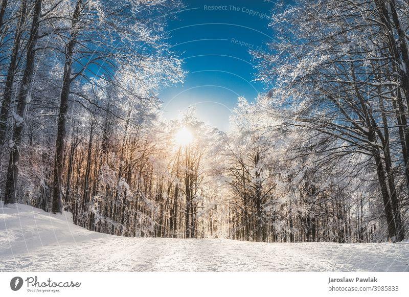 Sonniger Tag in den Bergen Höhe Winterzeit Ausflug Klima Schnee Berge u. Gebirge Natur Eis im Freien reisen Landschaft Himmel kalt schön Saison Wald verschneite