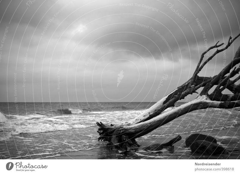Klassisch.... alt Wasser Baum Meer Einsamkeit ruhig dunkel Tod Traurigkeit Küste Holz Stein Zeit Horizont Wind ästhetisch