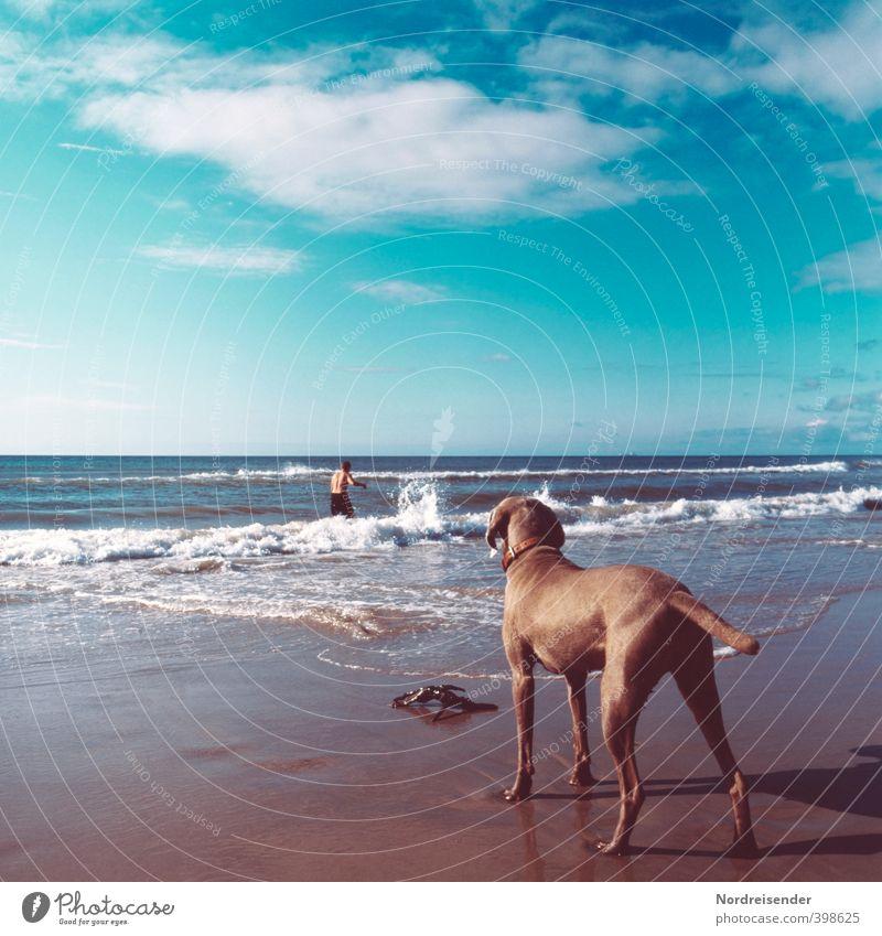 Aufpassen.... Ferien & Urlaub & Reisen Ferne Freiheit Sommer Sommerurlaub Sonnenbad Strand Meer Wellen Mensch Mann Erwachsene 1 Himmel Wolken Schönes Wetter