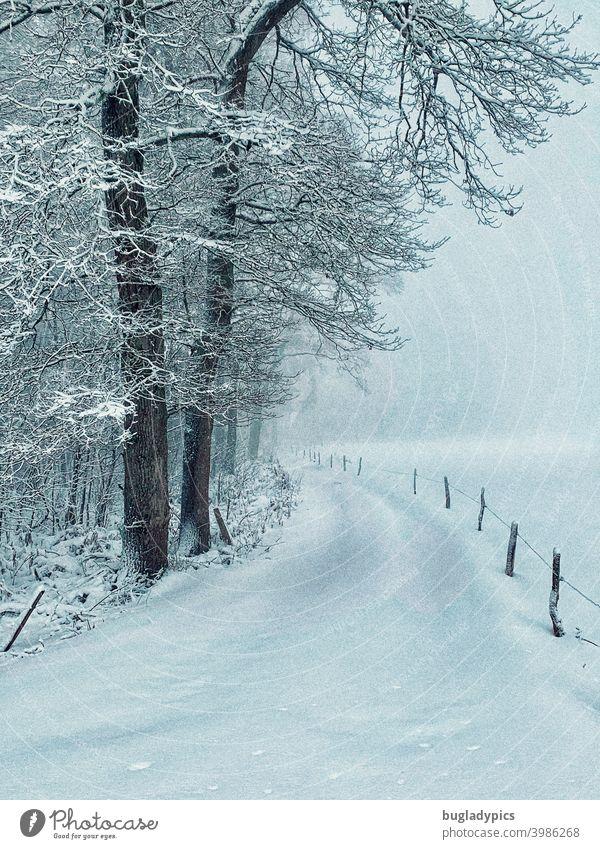 Winterliche Pfade - Winterwald Schneelandschaft Wege & Pfade Winterwandern Winterwanderweg Bäume Baum Zaunpfähle Schneedecke schneebedeckt Winterurlaub