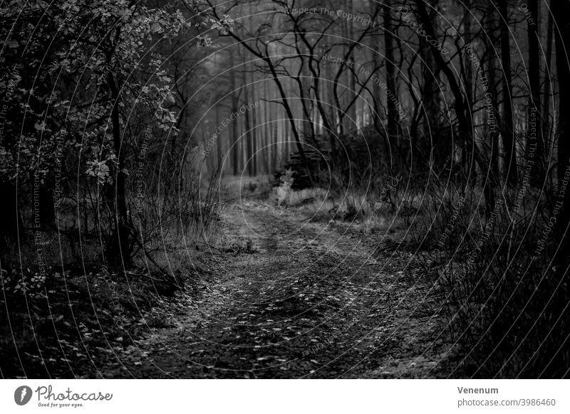 Waldweg im Winter in Deutschland Schneise Wälder Baum Bäume Gras Ast Niederlassungen Natur Holzfällerei Holzwirtschaft Holzindustrie Holzmanagement wandern