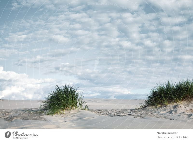 Letztes Grün... Himmel Ferien & Urlaub & Reisen Sommer Pflanze Einsamkeit Landschaft ruhig Wolken Ferne Leben Gras Wege & Pfade Freiheit Sand träumen Klima