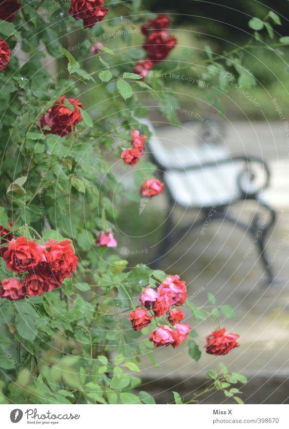 Romantik pur Häusliches Leben Garten Rose Gefühle Stimmung Liebe Tierliebe Verliebtheit Liebesaffäre Lustgarten Parkbank Treffpunkt Verabredung Rosengarten