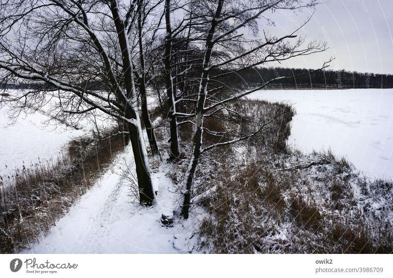 Winter von oben Außenaufnahme Lausitz friedlich Bäume Äste und Zweige kahl Ruhe melancholie Zweige u. Äste Laubbaum Teich hoch Baumstamm Schönes Wetter