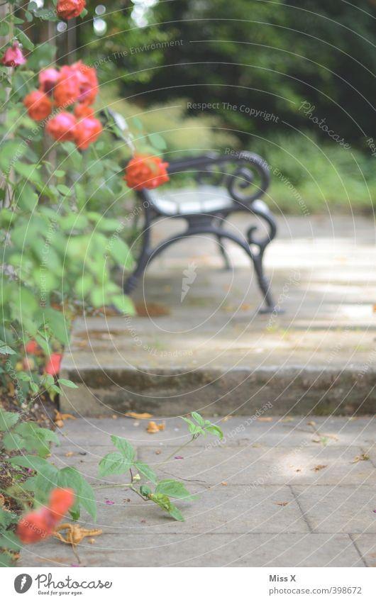 roses rot Blume Garten Stimmung Häusliches Leben Blühend Romantik Rose Verliebtheit Duft stachelig Parkbank Rosengarten Lustgarten