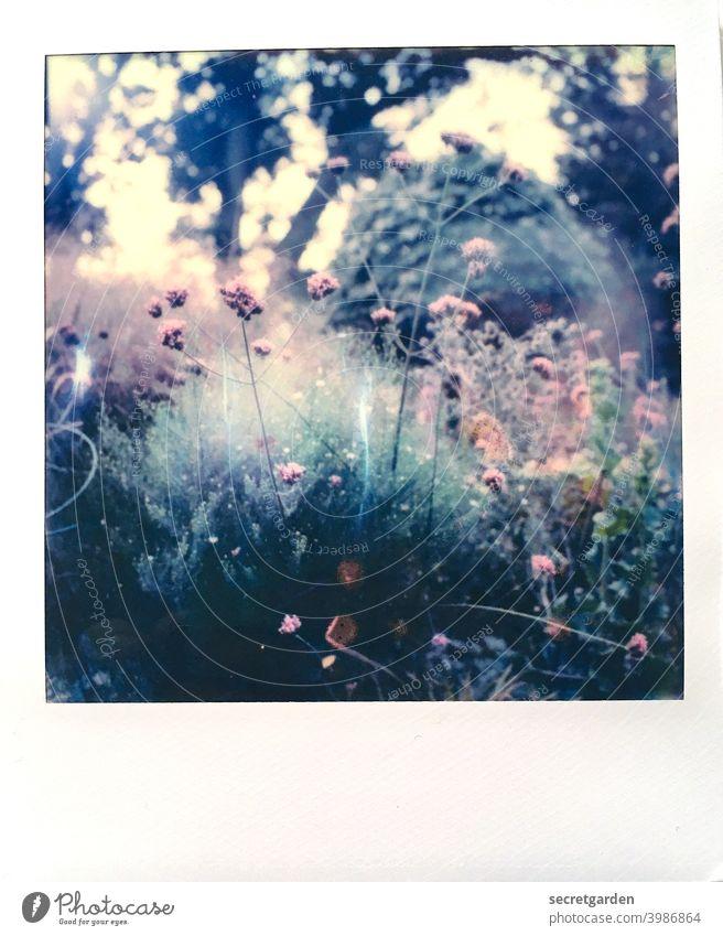 Secret garden. Frühling Frühlingsgefühle Farbfoto Außenaufnahme Pflanze Blume Natur Tag Menschenleer Blühend Schwache Tiefenschärfe schön Garten Nahaufnahme