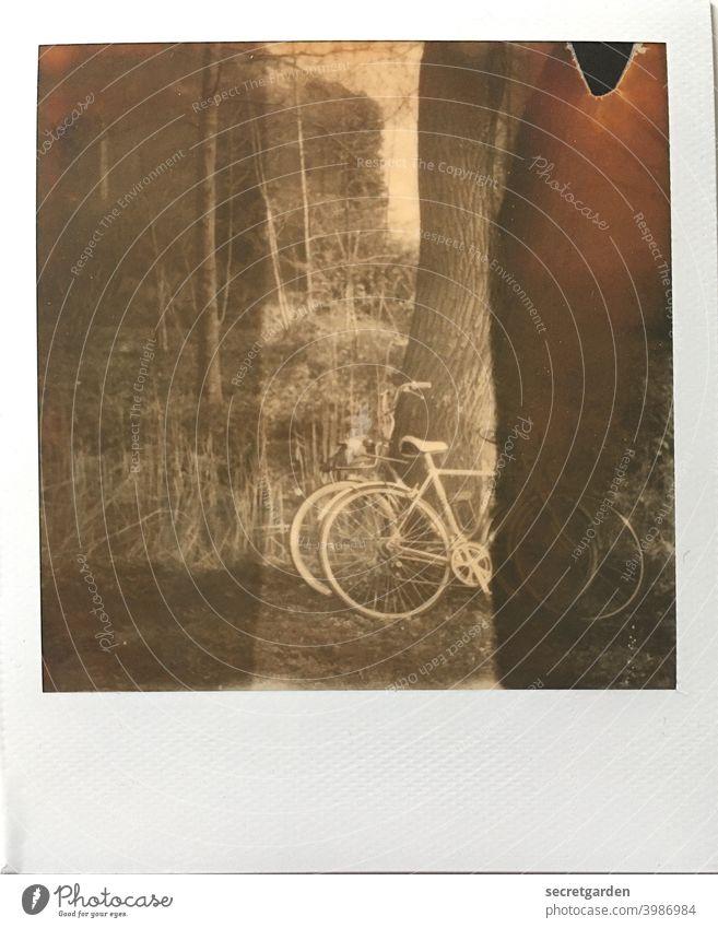 Romantik ist eine gemeinsame Fahrradtour. Und dann ab in den See! romantisch Fahrradfahren Baum anlehnen Park Polaroid analog Streifen Ausflug Außenaufnahme