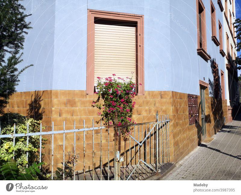 Alter Zaun vor einem Vorgarten mit Blumenschmuck im Sommer bei Sonnenschein vor hellblauer Fassade im Nordend von Frankfurt am Main in Hessen Sonnenschutz