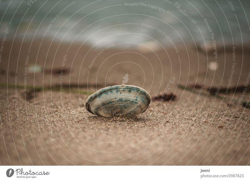 Muschel liegt im Sand am Strand | Im Hintergrund die Wellen der Ostsee Strandsand Strandspaziergang Muschelschale Muschelform muscheln sammeln Spaziergang