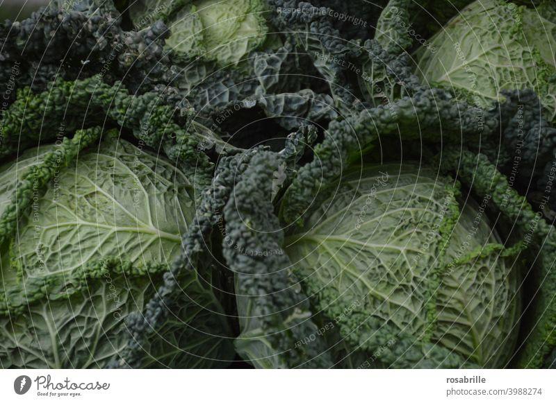 Da haben wir den Salat  | oder doch lieber Wirsing? Kohl grün Grünzeug vegetarisch gesund Nahrung essen Essen Ernährung Gemüse Gemüseanbau gesunde Ernährung