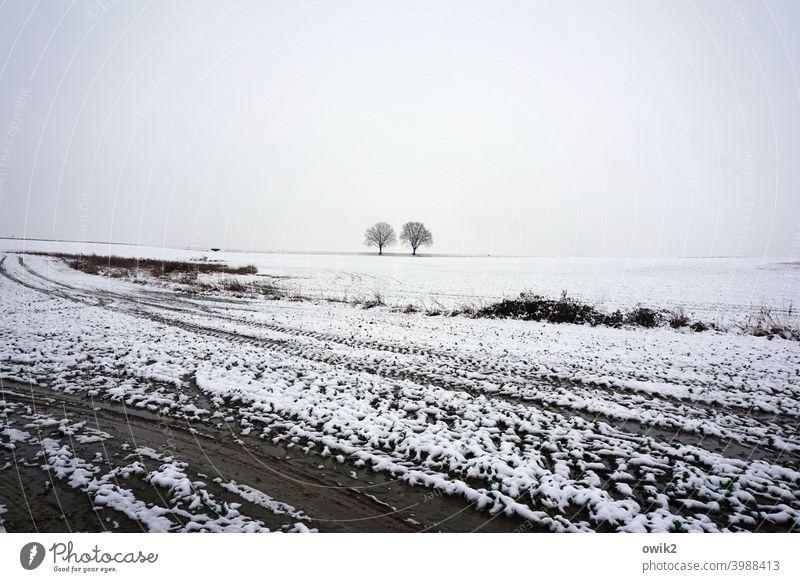 Kalte Scholle weiß karg Schönes Wetter Winterstimmung Schneelandschaft Umwelt Natur Ferne Baum kalt Landschaft Horizont Bäume Acker Weite Menschenleer kühl