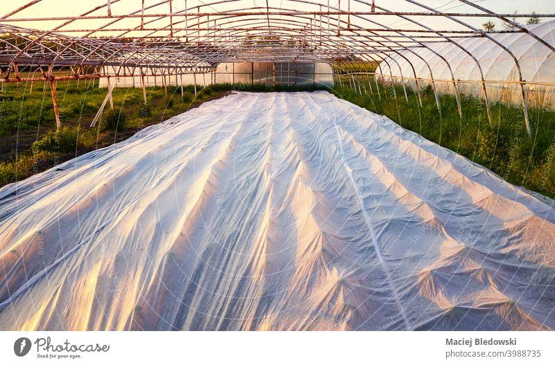Schwebende Reihendecke ist der Bio-Bauernhof bei Sonnenuntergang. natürlich Kunststoff Deckung schwimmende Reihenabdeckung ländlich Mulch Garten Pflanze
