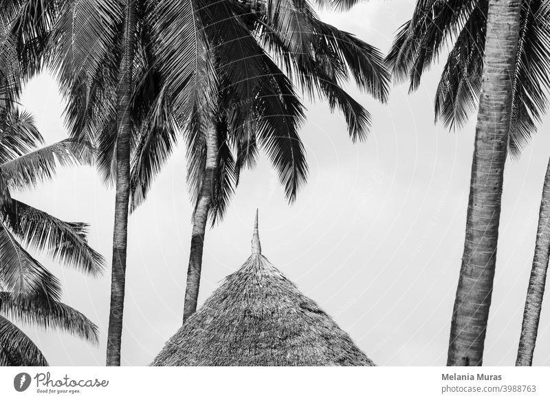 Strohdach Nahaufnahme unter Palmen, Schwarz-Weiß-Foto. Detail der Hütte im Paradies Resort. Tropische Ferien, tropisches Klima. abstrakt Architektur