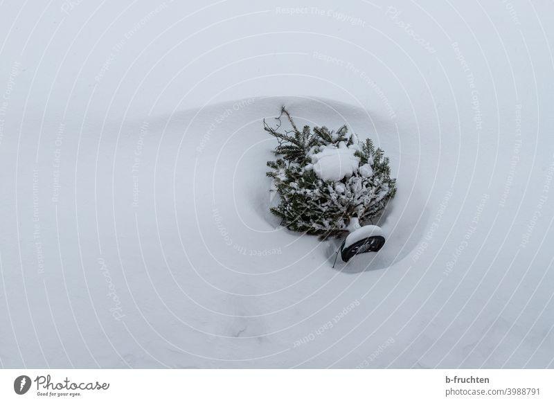Weihnachtsbaum liegt im Schnee Christbaum Knutfest Schweden Baum liegen umwerfen Weihnachten & Advent Tannenbaum weihnachtlich Winter Tradition Feste & Feiern