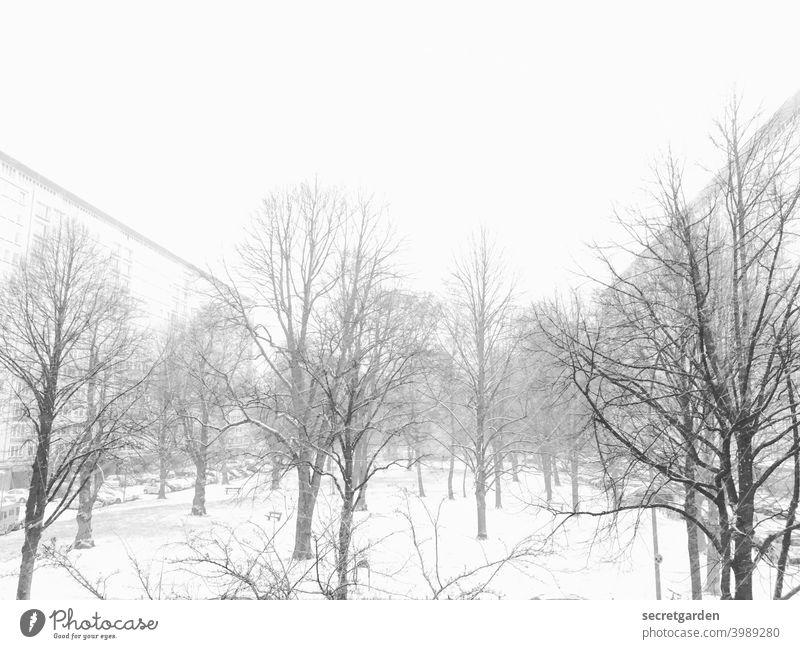 Winterwonderland! Schnee Schneelandschaft Schneefall Außenaufnahme kalt Frost Eis Natur Baum Landschaft Menschenleer weiß Tag Umwelt Wetter Winterstimmung