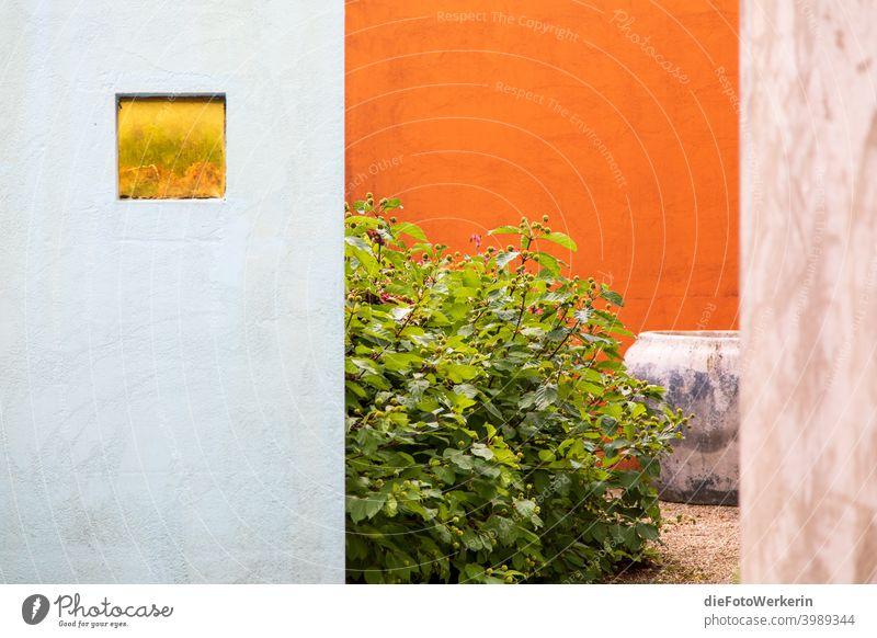 Blick in einen mediterranen Innenhof Garten architektur Farben Natur pflanze Zauberstab orange Grün Farbfoto natürlich leben Sommer Detailaufnahme