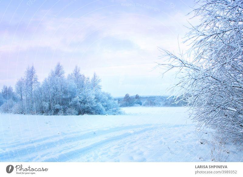 Schöne Winterlandschaft mit Feld von weißem Schnee und Wald am Horizont auf sonnigen frostigen Tag. Landschaft Natur Frost Hintergrund im Freien Baum Saison