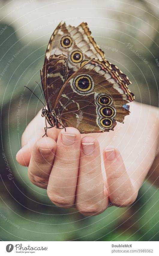 Ein Schmetterling sitzt auf einer Hand Schmetterlingshaus Flügel Nahaufnahme Tier Farbfoto Gedeckte Farben Tag Makroaufnahme Außenaufnahme