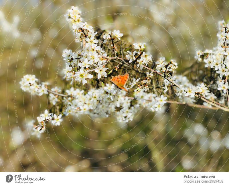 Schmetterling im Blütenmeer Natur Frühling sommer Nahaufnahme Tier Farbfoto fliegen Flügel Pflanze