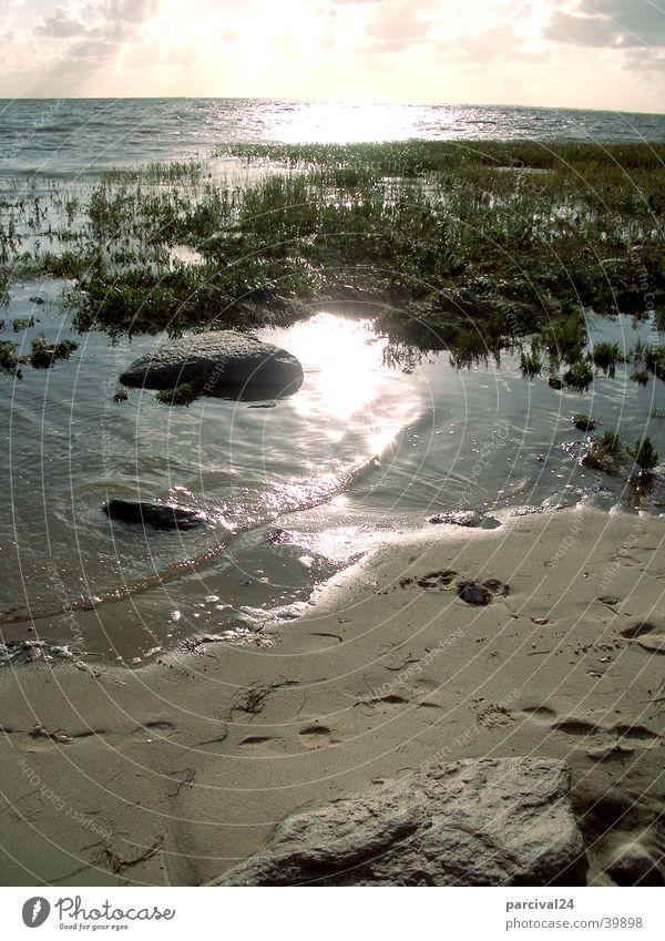 Emmerlev Strand Meer Wasserpflanze Reflexion & Spiegelung Licht Sand Stein Pflanze Sonne