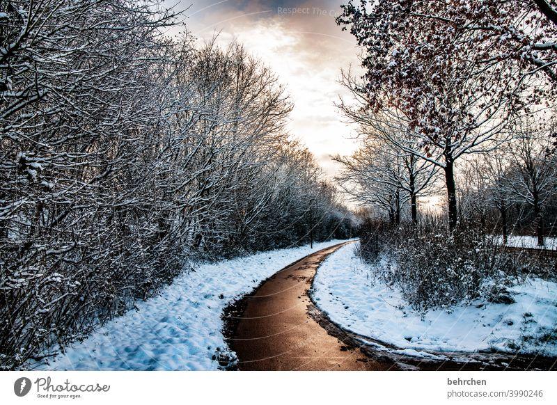 auf güldenen wegen Farbfoto schön verträumt idyllisch Schneedecke Schneelandschaft Winterspaziergang Wintertag Winterstimmung Heimat Baum Menschenleer Raureif