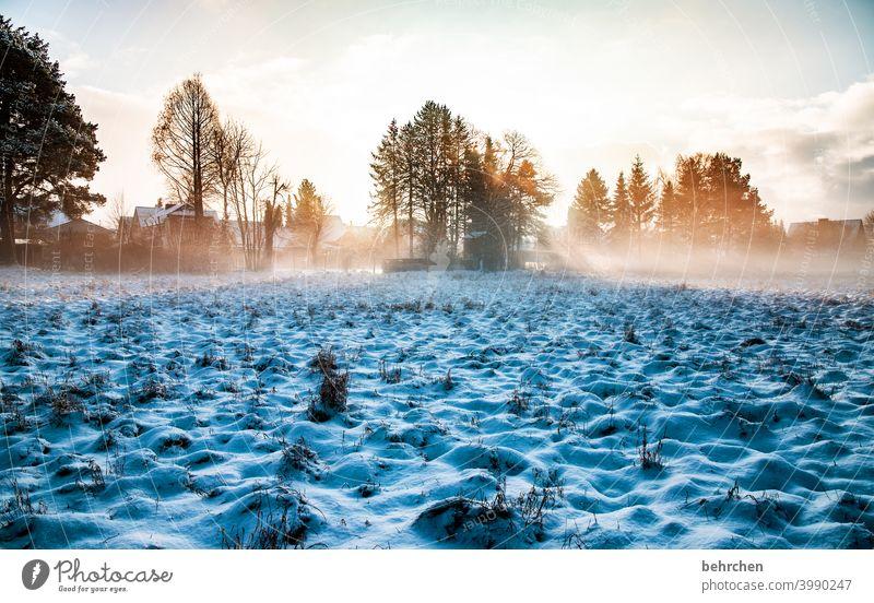 licht und schatten hoffnung sonnenstrahlen Sonne Sonnenlicht Schneefall weiß ruhig Umwelt Natur Wiese Feld Wald Winter Himmel Landschaft Frost Bäume