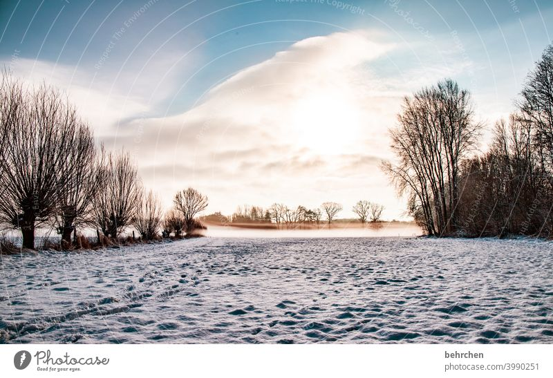 wintermorgen Farbfoto ruhig Umwelt Landschaft Himmel frieren gefroren Raureif Jahreszeiten Frost Natur Wiese Feld Bäume stille Wetter Menschenleer Baum Idylle