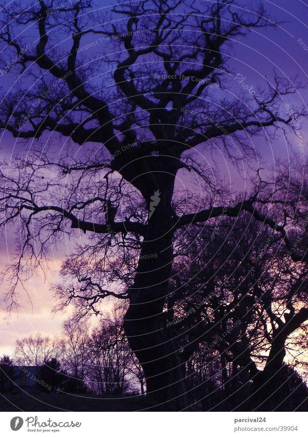 Jenischpark Natur Himmel Baum Sonne Landschaft Stimmung